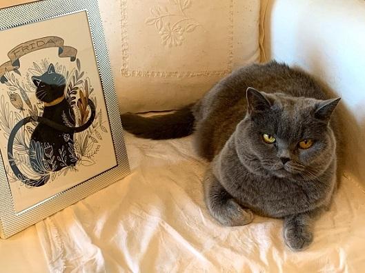 Frida-la gata- y su retrato