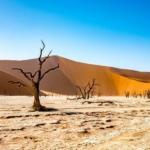Día Mundail de la lucha contra la desertificación y la sequía