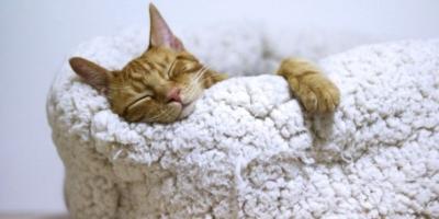 Día Mundial de los gatos